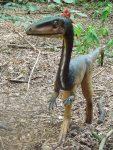 Coelophysis (Zoo Amersfoort)
