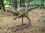Deinonychus (Zoo Amersfoort)