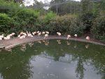 Flamingovoliere (Affen- und Vogelpark Reichshof-Eckenhagen)