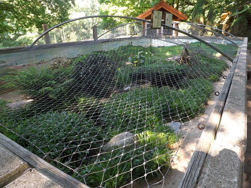 Freianlage für Giftschlangen (Wildpark Schwarze Berge)
