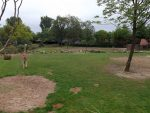 Giraffenanlage (Zoo Rotterdam)