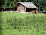 Hochlandrinderanlage (Wildpark Schwarze Berge)