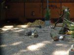 Kaninchenanlage (Wildpark Schwarze Berge)