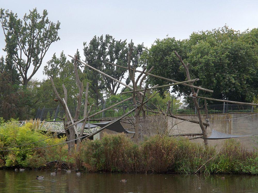 Kattaanlage (Zoo Rotterdam)