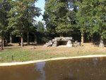 Löwenanlage (Zoo Planckendael)