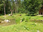 Schwarzstorchanlage (Wildpark Cumberland)
