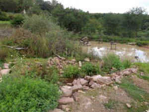 Teich (Wildpark Klaushof)