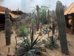 Wüste (Zoo Rotterdam)