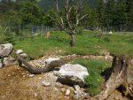 Waschbärenanlage (Wildpark Cumberland)