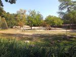 Afrikasavanne (Zoo Planckendael)