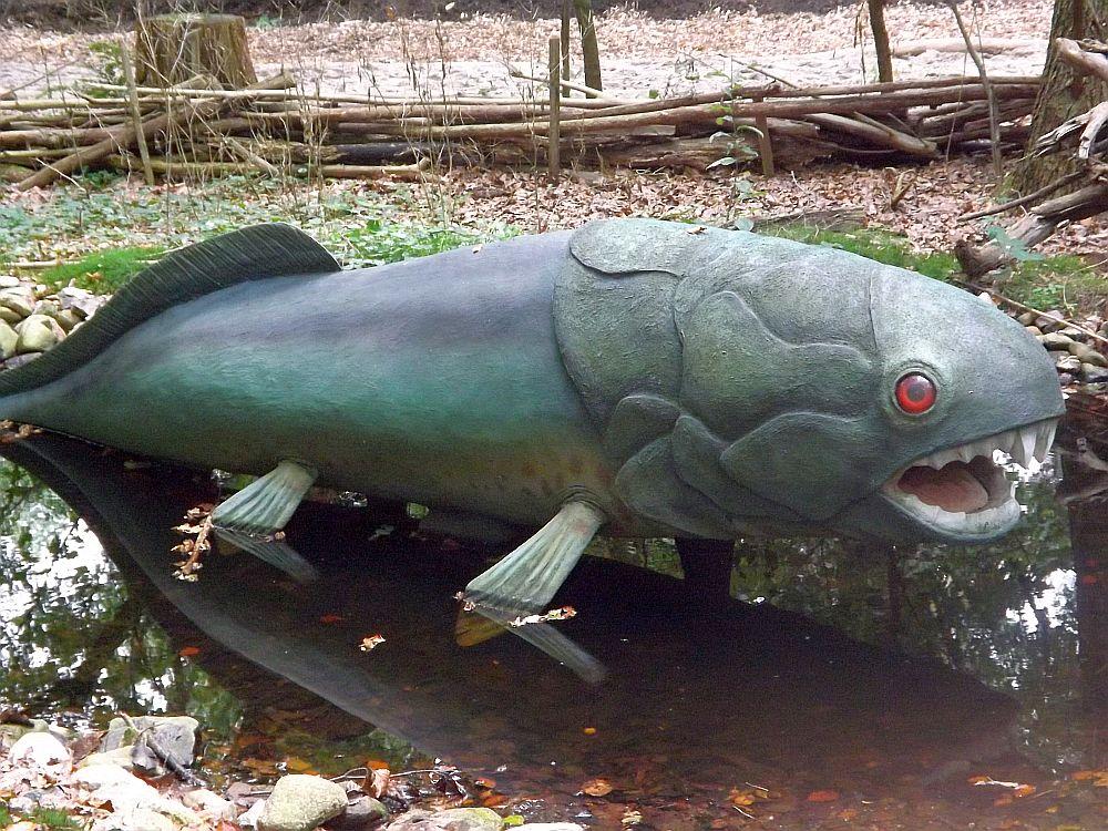 Duncleosteus (Zoo Amersfoort)