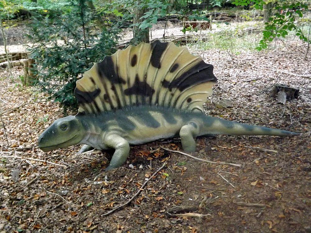 Edaphosaurus (Zoo Amersfoort)
