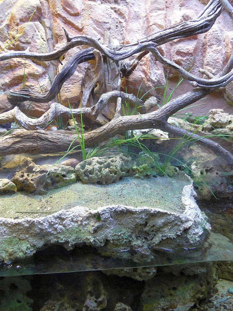 Landeinsiedleraquaterrarium im Aquarium (Zoo Köln)