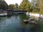 Mähnenrobbenanlage (Tierpark Hellabrunn)