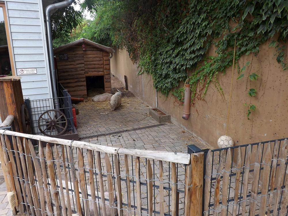 Minischweinanlage (Zoo Landau)
