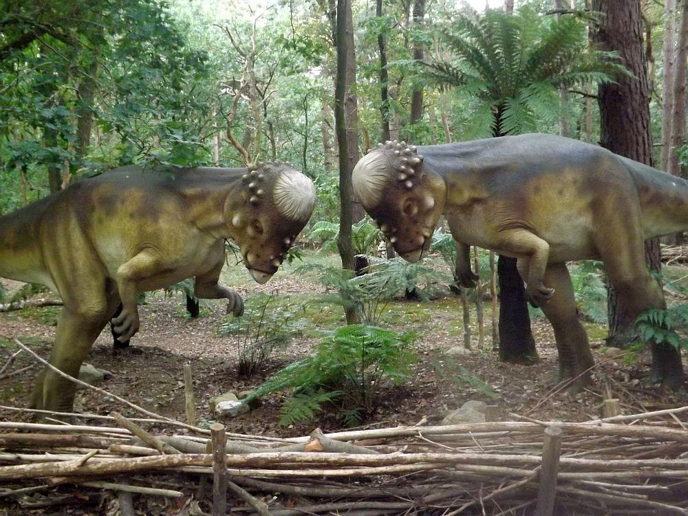 Pachycephalus (Zoo Amersfoort)