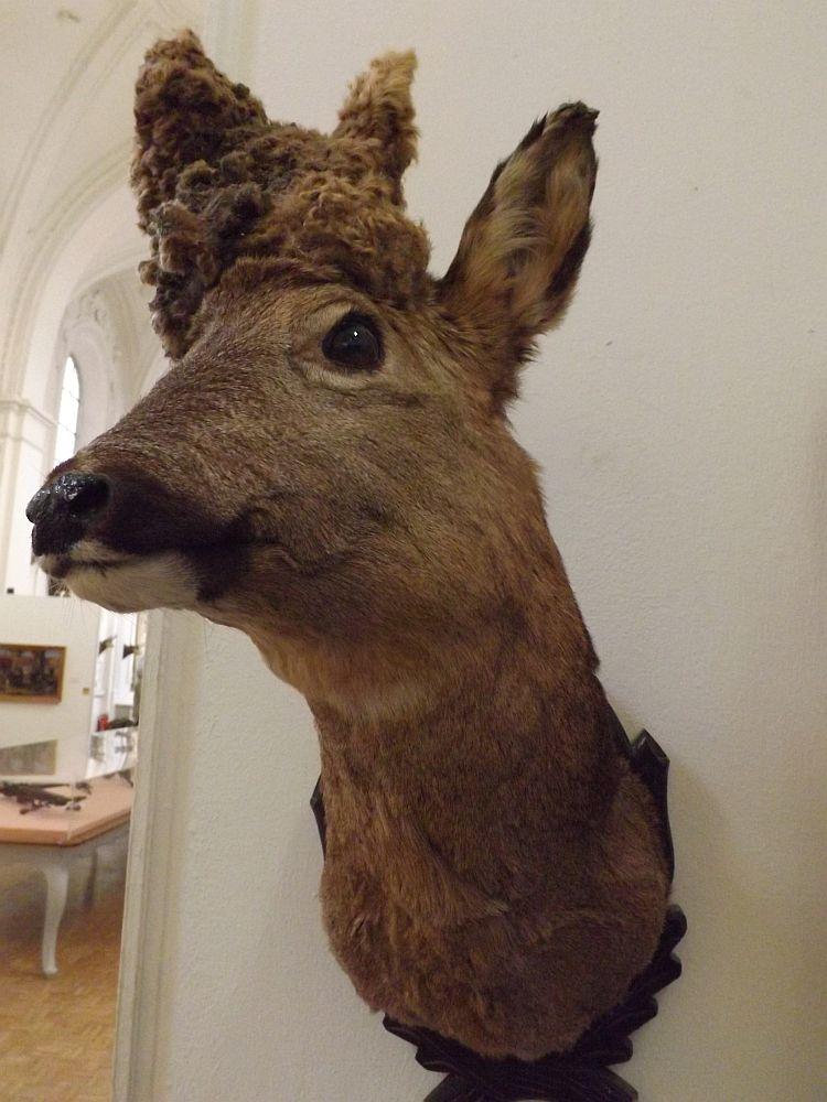 Perückenbock (Deutsche Jagd- und Fischereimuseum)