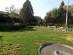 Begehbare Pinguinanlage (Zoo Planckendael)