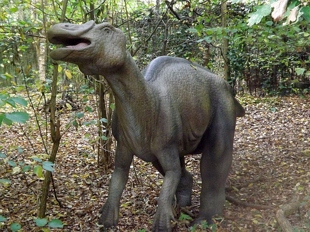Probactrosaurus (Zoo Amersfoort)