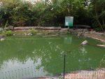 Außenanlagen für Wasserschildkröten (Reptilium Terrarien- und Wüstenzoo Landau)