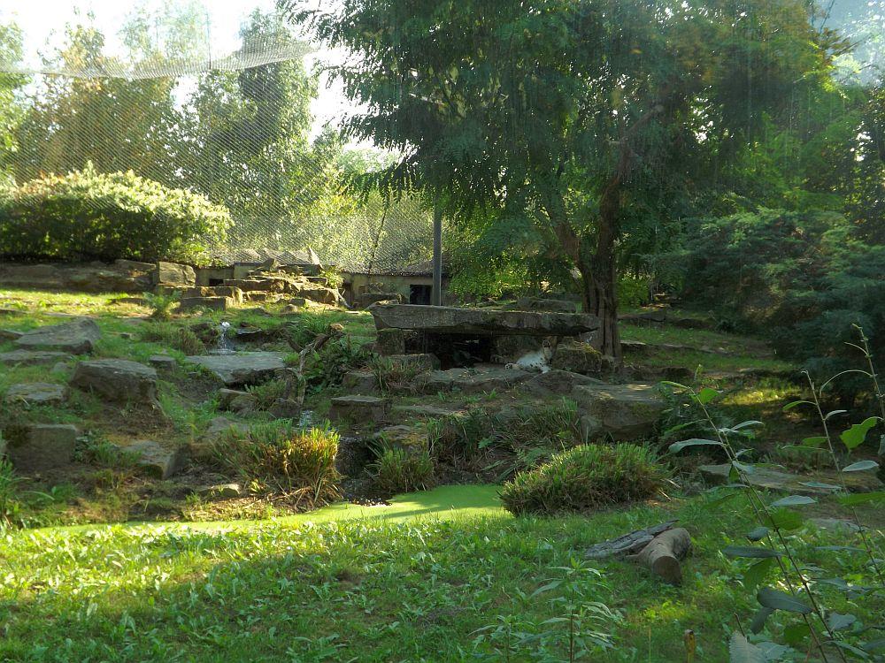 Schneeleopardenanlage (Zoo Planckendael)