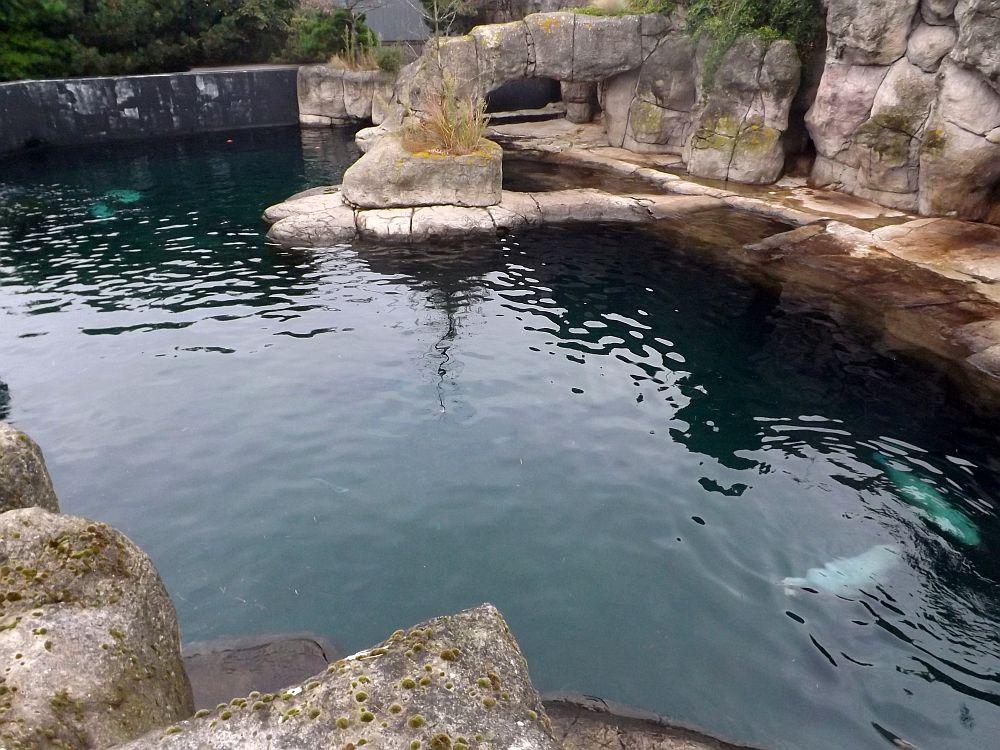 Seelöwenanlage (Zoo Rotterdam)
