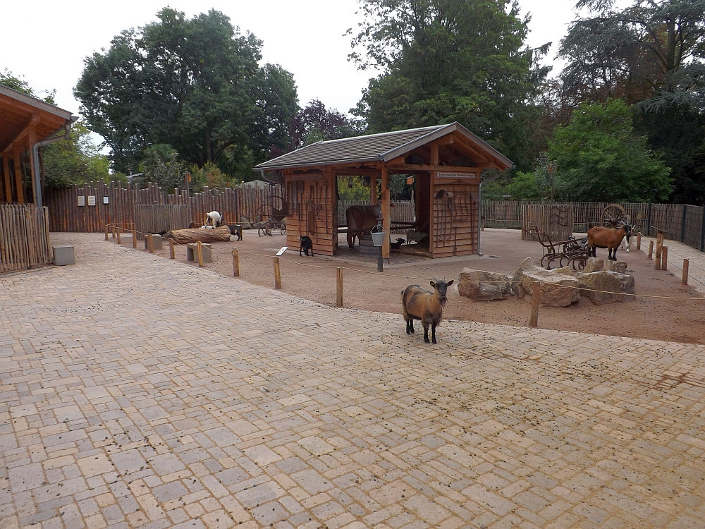 Streichelzoo (Zoo Landau)