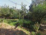 Voliere für australische Vögel (Zoo Planckendael)