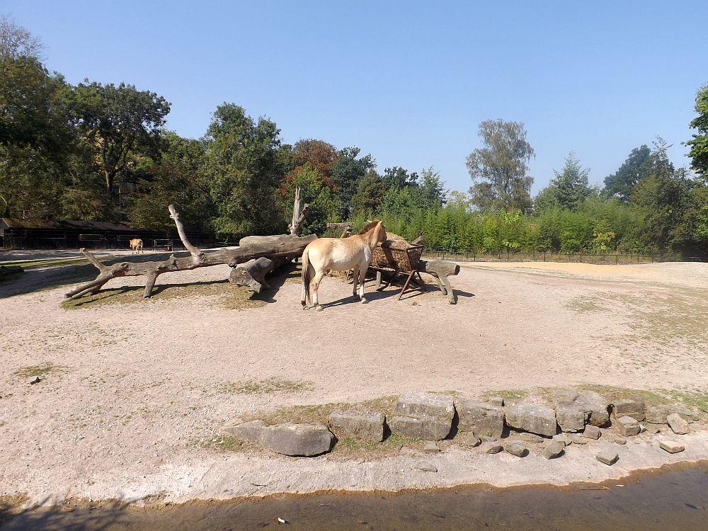 Wildpferdanlage (Zoo Planckendael)