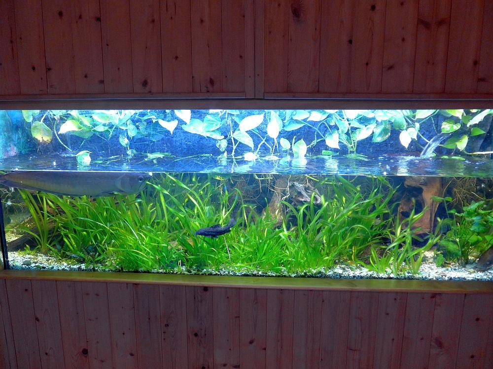Aquarium für Gabelbart und Welse (Inselzoo Altenburg)