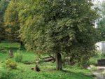 Bärenanlage (Heimat-Tierpark Olderdissen)