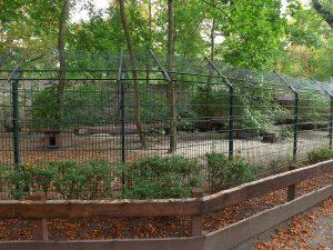 Dingoanlage (Tiergarten Staßfurt)