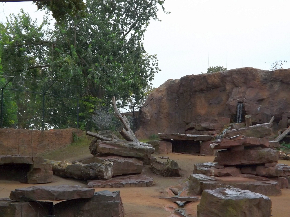 Anlage für Dscheladas und Steinböcke (Zoo Magdeburg)