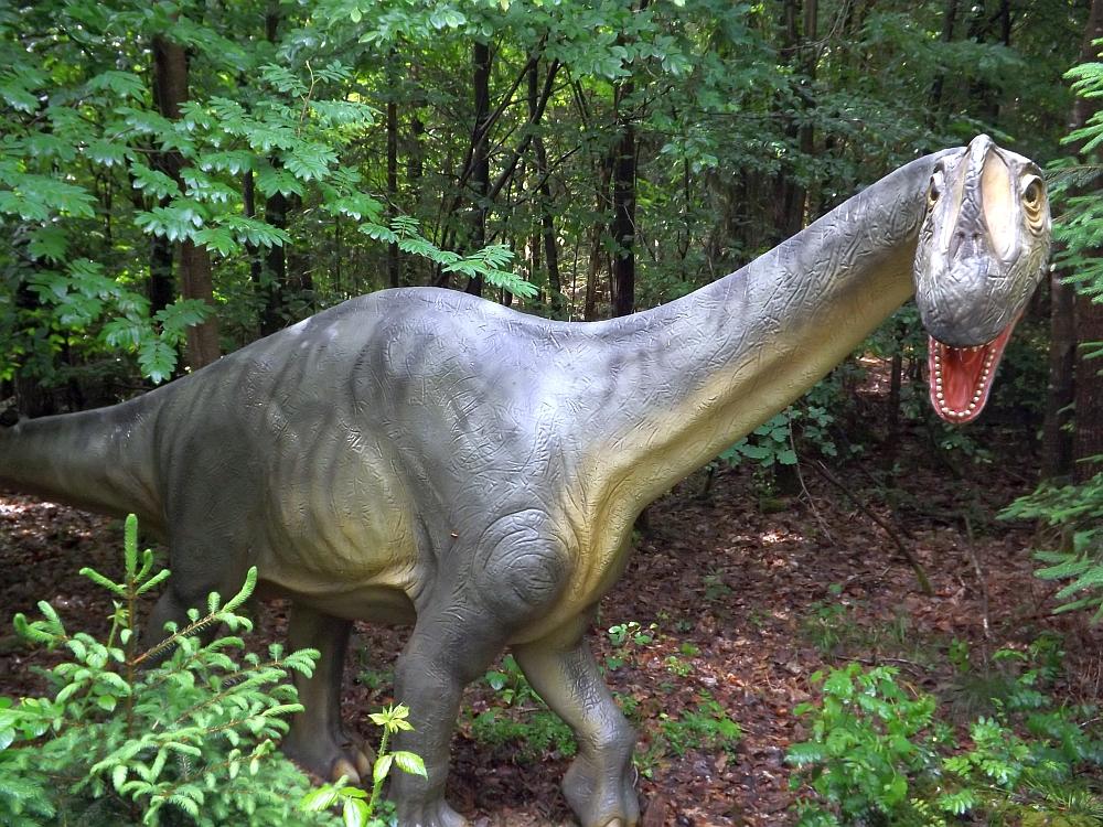 Europasaurus holgeri (Dinopark Altmühltal)