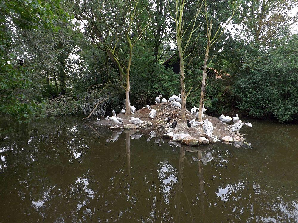 Pelikanteich (Zoo Rotterdam)