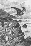 """Illustration aus """"Die Eissphynx"""" (Georges Roux)"""