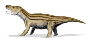 Cynognathus crateronotus ein Vertreter der Cynodontia (© N. Tamura)
