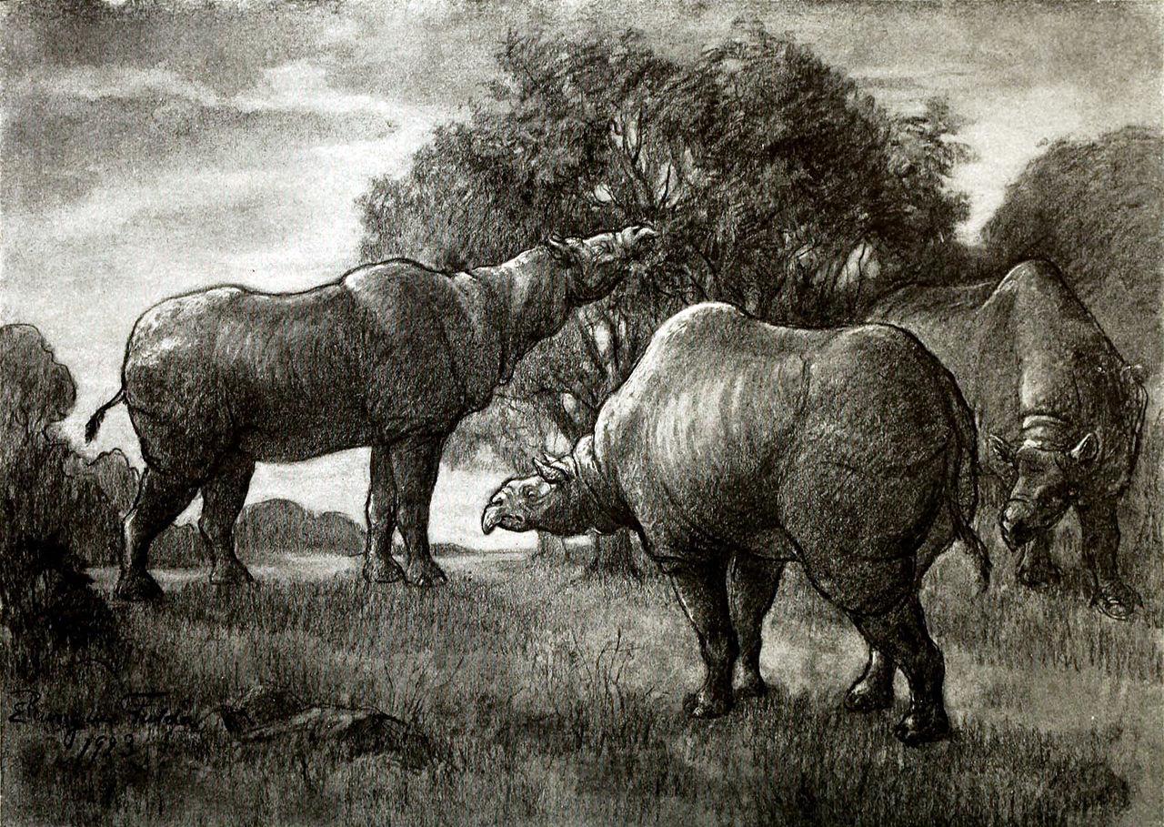 Paraceratherium transouralicum (Elizabeth Rungius Fulda)