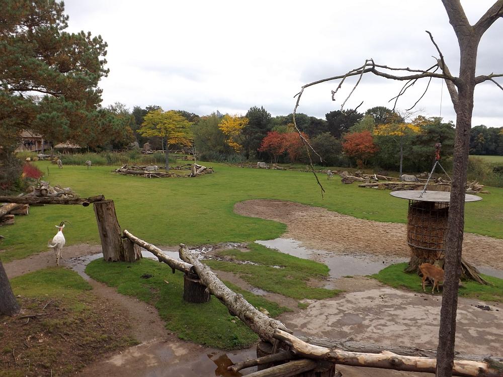 Kiwaralodge (Zoo Leipzig)