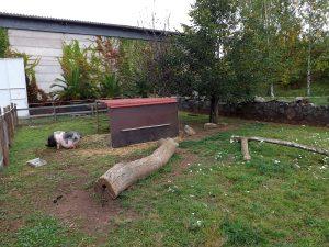 Anlage für Minipigs (Thüringer Zoopark)
