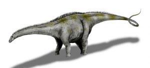 Apatosaurus ajax (© N. Tamura)