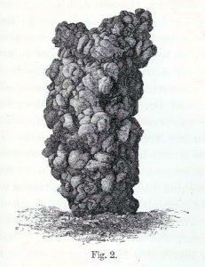 Bodenbildende Ausscheidungen von französischen Regenwürmern (aus Darwins Die Bildung der Ackererde durch die Tätigkeit der Würmer)