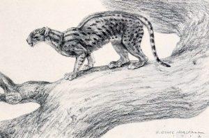 Dinictis felina (Robert Bruce Horsfal)
