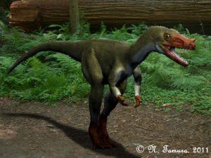 Proceratosaurus bradleyi (© N. Tamura)