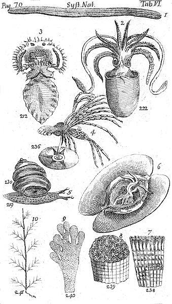 Systema Naturae Plate VI - Würmer