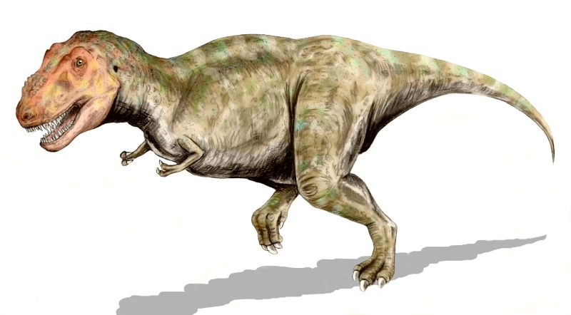 Tyrannosaurus rex (© N. Tamura)