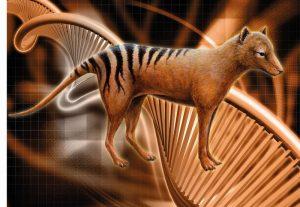 Der  Beutelwolf im Zentrum der Genomrekonstruktion (Zeichnung: Jon Baldur  Hlidberg)