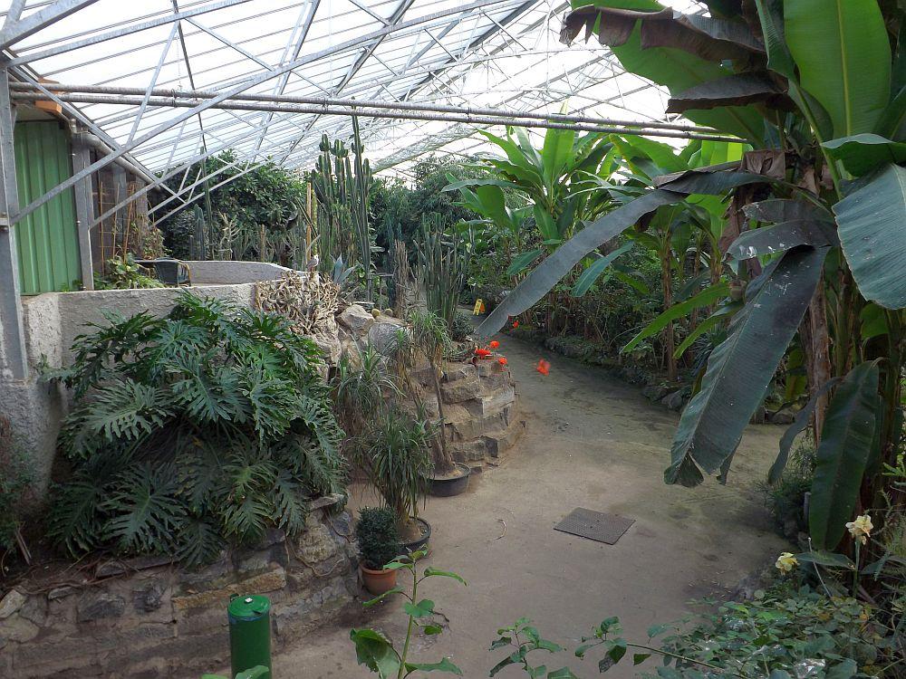 Tropenhaus (Olmense Zoo)
