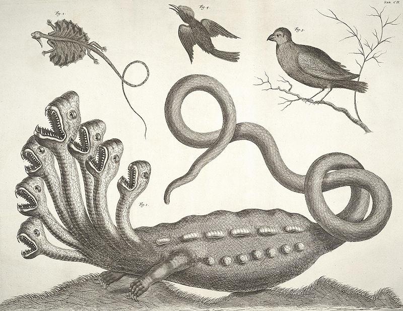 """Die """"Hamburger Hydra"""" in Albert Sebas Thesaurus von 1734 (Band 1, Tafel 102), die von Linné als Fälschung erkannt wurde"""