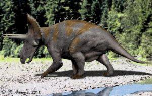 Triceratops horridus (© N. Tamura)